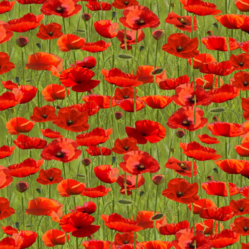 Remembering Anzac Poppies Green