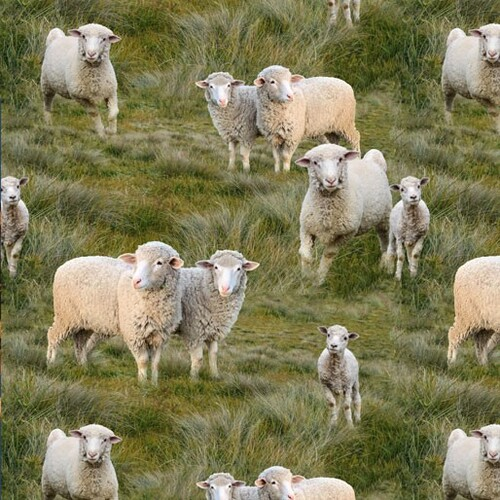 Merino Muster Sheep Lambs Allover N